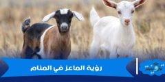 تفسير رؤية الماعز في المنام لابن سيرين