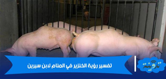 الخنزير في المنام