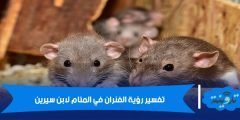 الفئران في المنام